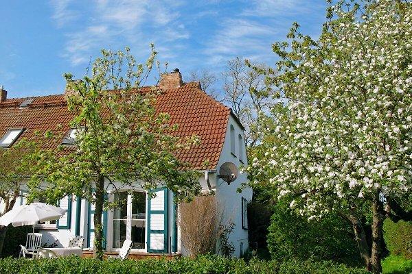Ferienhaus Wustrow-Gruenbaum en Wustrow (Ostsee) - imágen 1
