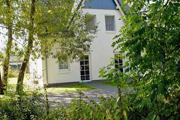Weidenhus in Zingst - immagine 1