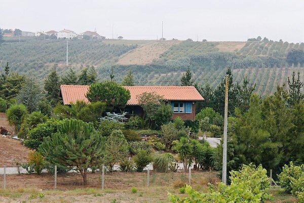Ferienhaus Agostinho in Obidos - Bild 1