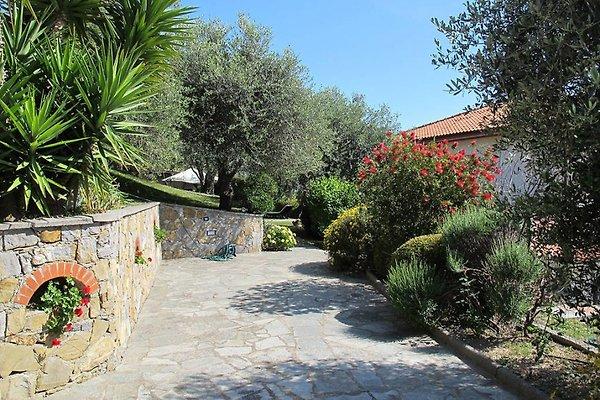 Einfahrt und Garten