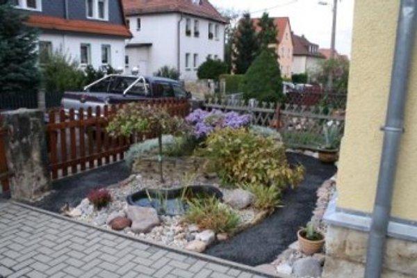 Vorgarten mit Einfahrt