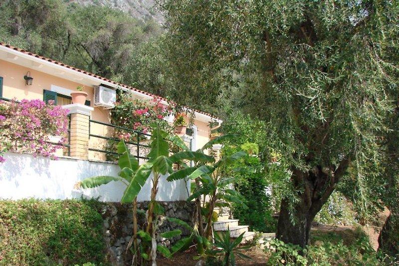 Kiki's Apartments à Barbati - Image 2