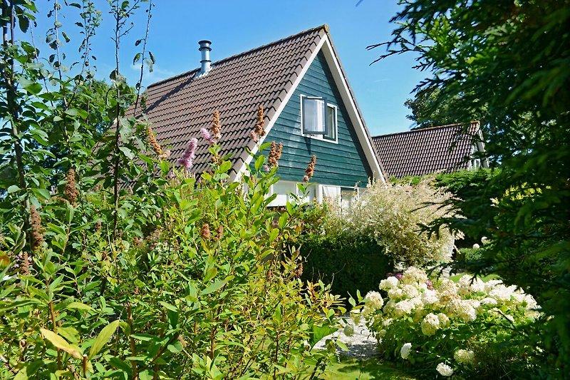 Sanuk in einem blühenden Garten