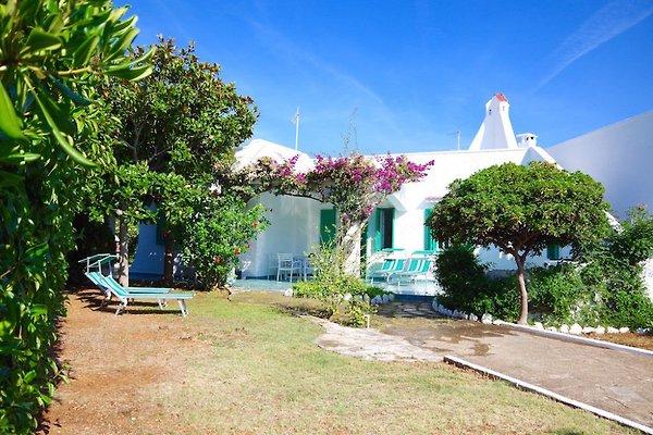 Villa delle Bougainvillée in Marina di Ostuni - immagine 1