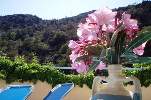 Oleandergarden - Garden Studio in Ferma - immagine 1