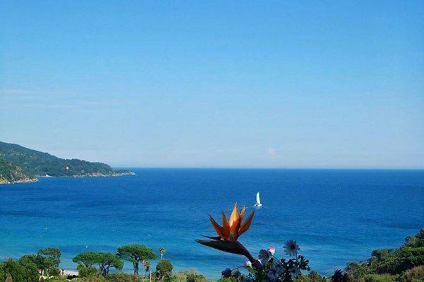 Appartement avec vue sur la mer à Le Lavandou - Image 1
