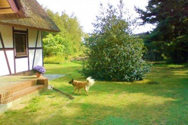 Ferienwohnung Schilfkante à Wieck - Image 1