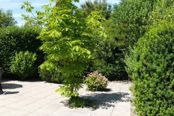 Ferienhaus Herckenstein 36 in Brouwershaven - Bild 1