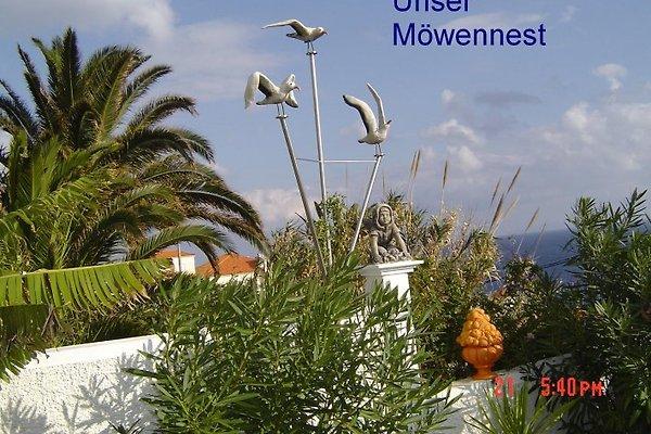 Möwennest y Casa Liesl en Caniço de Baixo - imágen 1