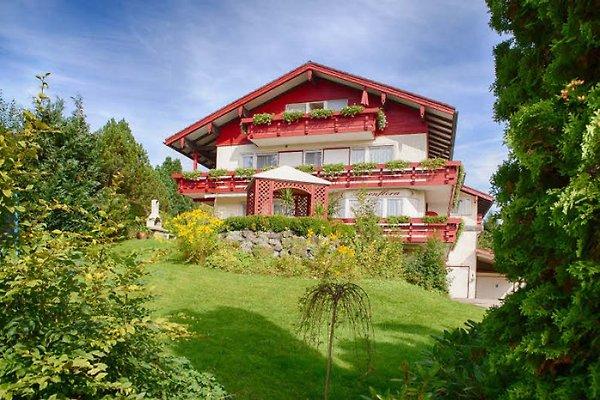 Alpenflora à Ofterschwang - Image 1