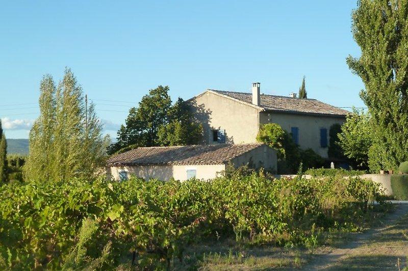 Das Anwesen mitten in Weinfeldern