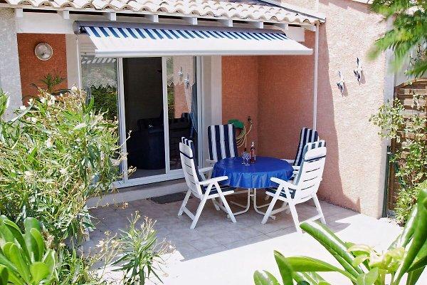 Mimosa, Languedoc-Rousillon, in Gruissan - immagine 1