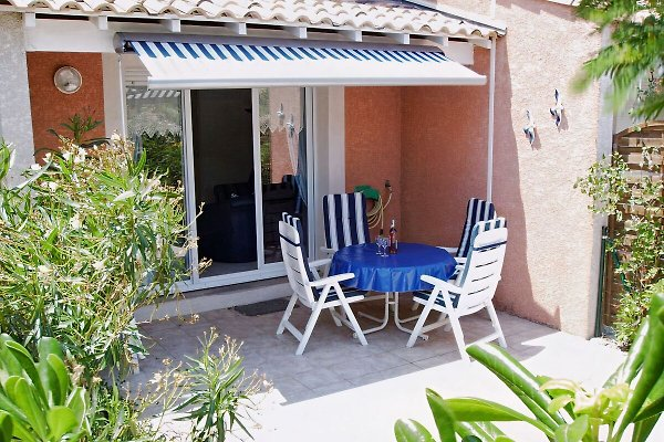 Mimosa, Languedoc-Rousillon, à Gruissan - Image 1