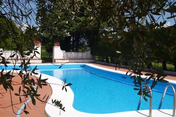 Cecubo - Wlan - Pool - Weingut in Cellole - Bild 1