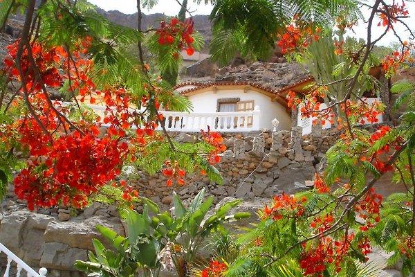 Finca La Palma - Gran Canaria in Mogán - immagine 1
