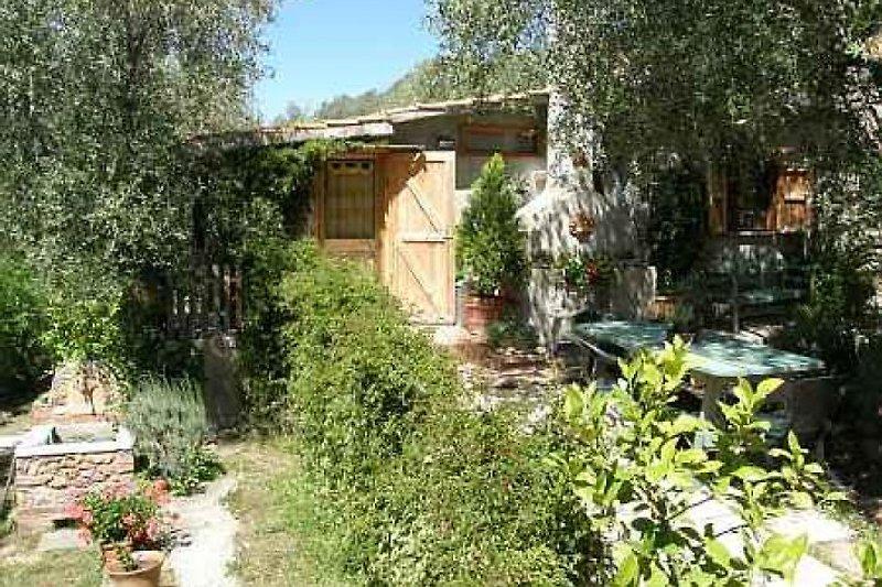 Casa Fiore in Montepescali - immagine 2