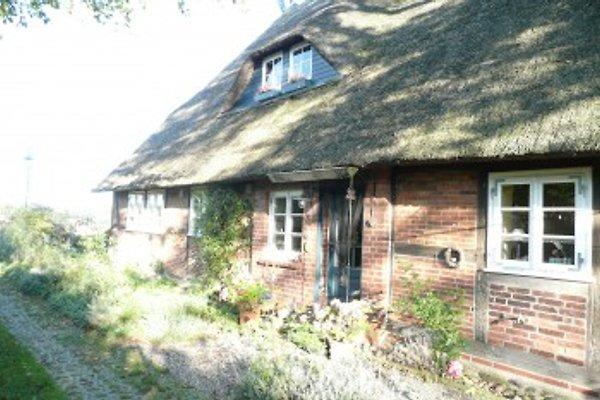 Das Reetdachhaus Bleckede in Bleckede - Bild 1