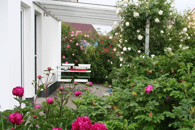 Überdachte Terrasse umgeben von Rosenrabatten.
