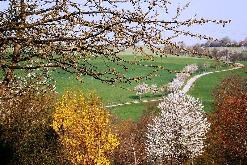 Frühjahr Blick ins Grüne