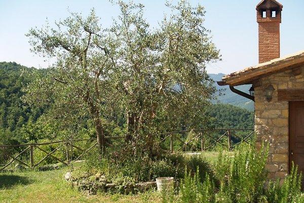POGGIO VALLE à Castel di Fiori - Image 1