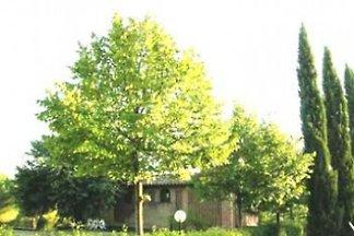 Fienile Avanella mit Pool - Chianti