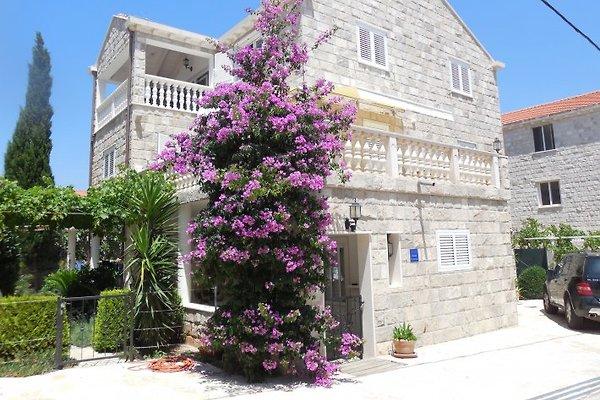 Ferienwohnung Haus Jurai 2 à Cavtat - Image 1