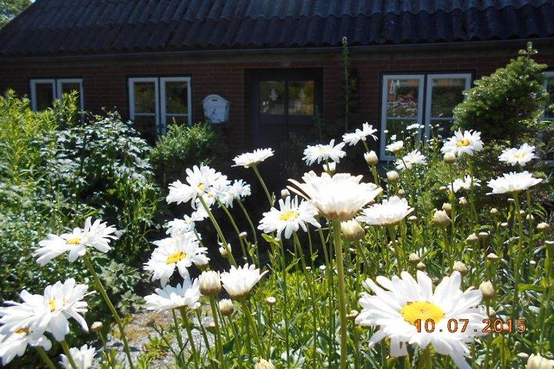 Blumengarten vorm Haus