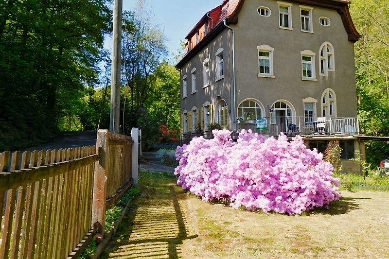 Rosas Garten im Frühling