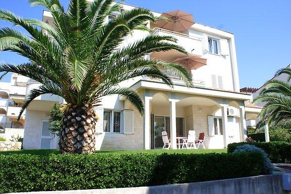 Ivana Appartement (Novalja)  à Novalja - Image 1