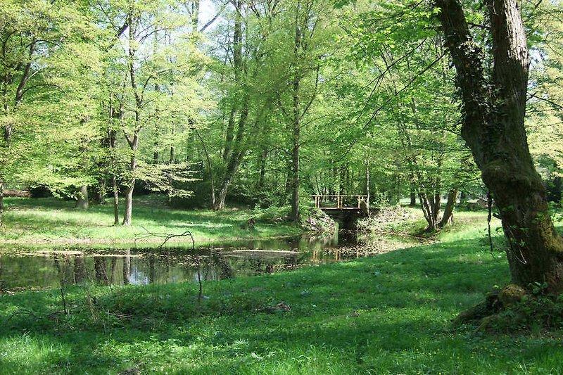 Umgebung: Madlitzer Park