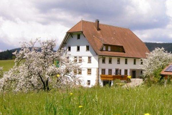 Unser Hof während der Kirschblüte.