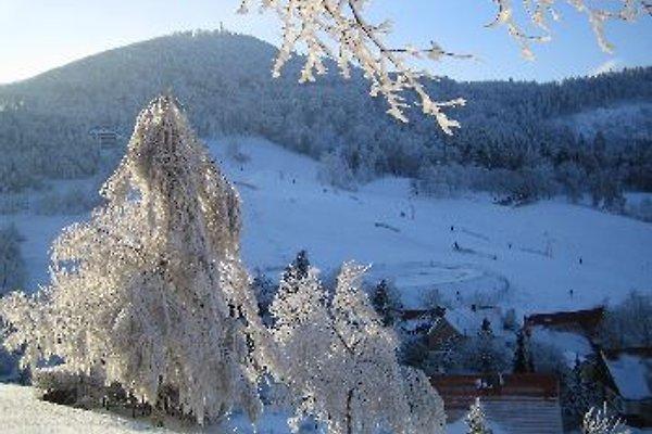 Holiday Noffke  à Seifhennersdorf - Image 1