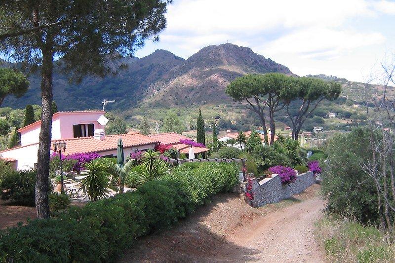 Gartenimpression mitHaus und Berge