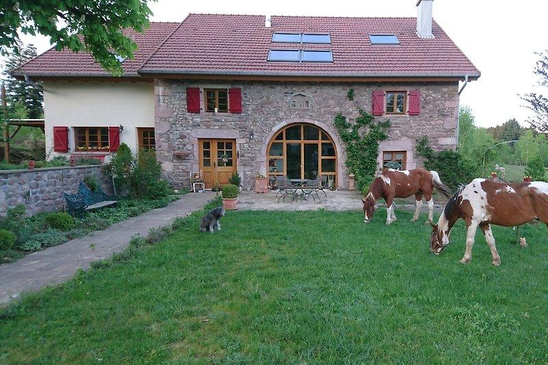 Landhaus mit Pferden und Hund
