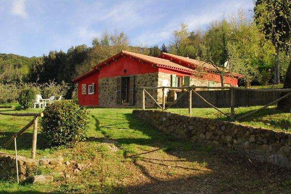 Pallaresino in Serrazzano - immagine 1
