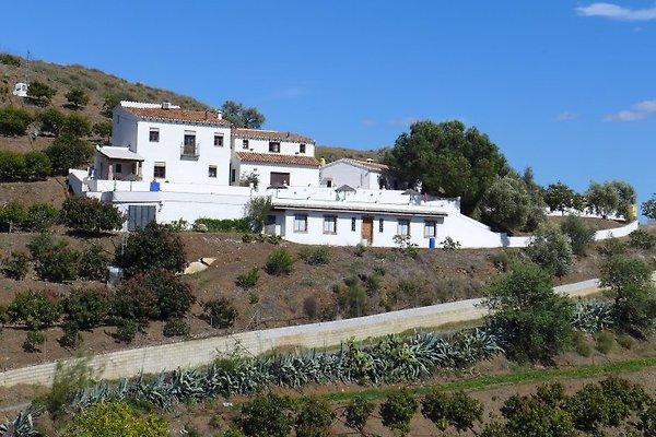 Finca Jaura in El Borge - Bild 1