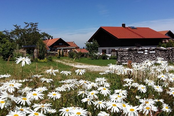 Forsthaus Chalet - Natur & SPA à Teisnach - Image 1