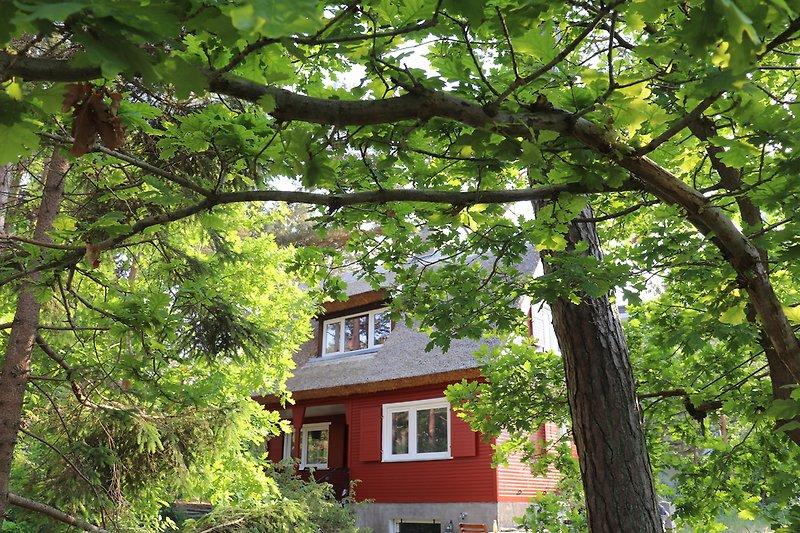 Blick aufs Haus vom Eingang aus