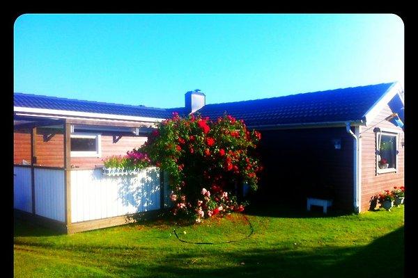 Sommerhaus in Schweden in Varberg - Bild 1