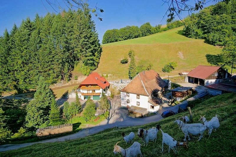 Steinmühle - Schwarzwald hautnah!