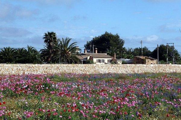 Finca Palmera, plage Estrenc à Ses Covetes - Image 1