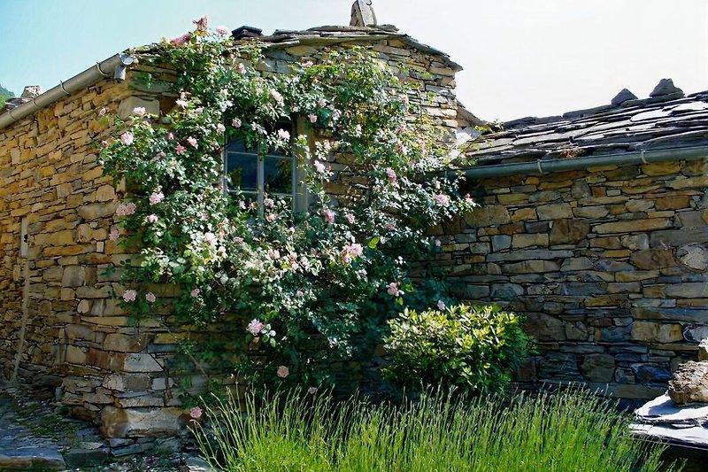 Haus im Rosenbusch