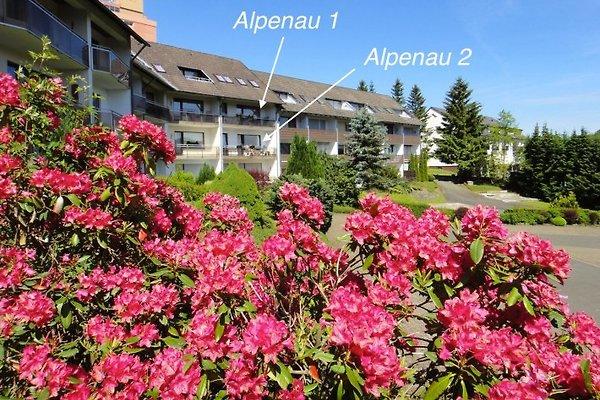 Alpenau à Altenau - Image 1