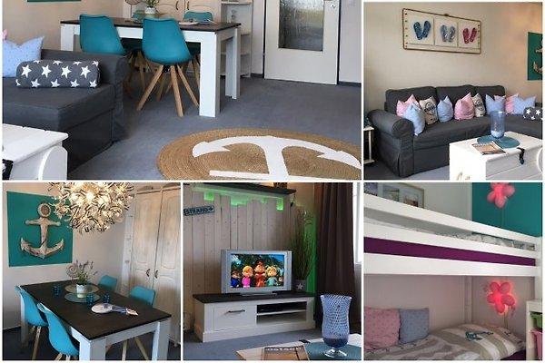 Strandmuschel Fehmarn en Burgtiefe-Südstrand - imágen 1