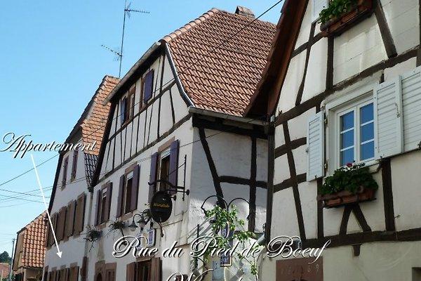 Appartement du Pied de Boeuf à Wissembourg - Image 1