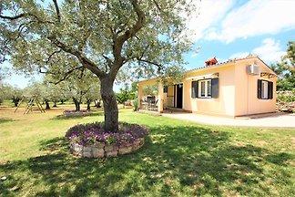 Ferienhaus in Olivenoase