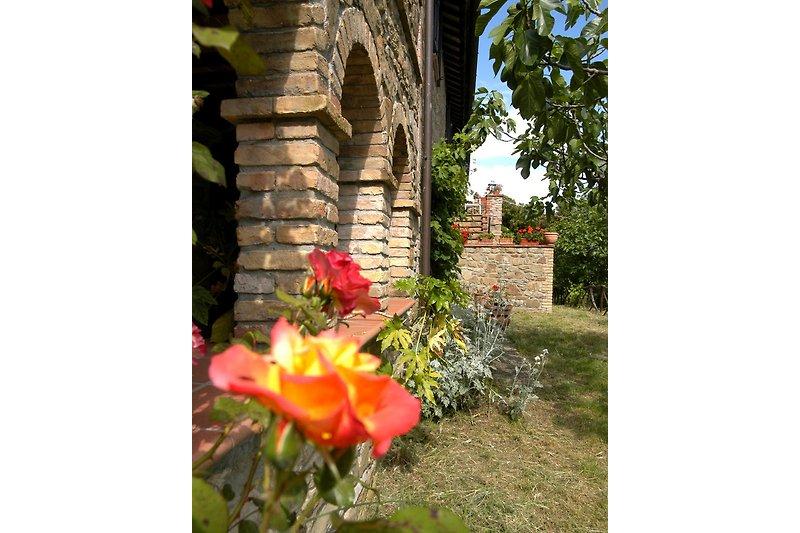Portico mit Rose (Wohnung Vera)