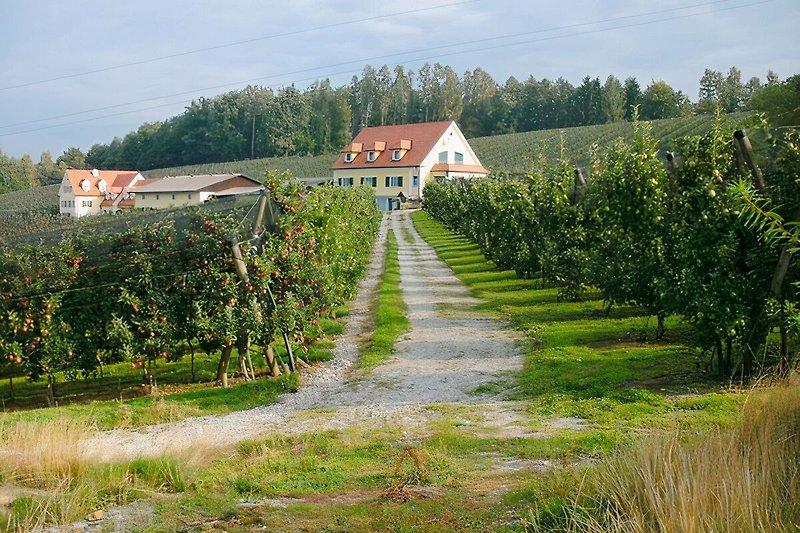 Unser Apfelhof inmtten von Apfelanlagen