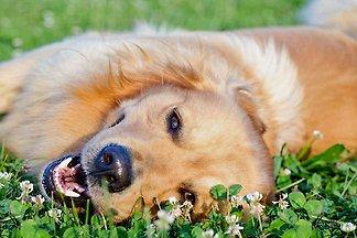 Sweet Home Grömitz  mit Hund