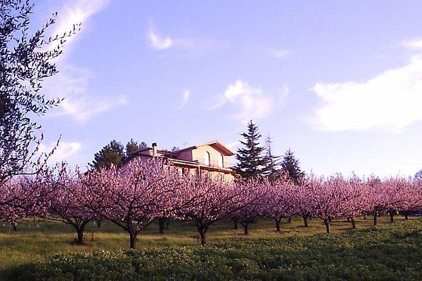 Villa Podere Costantino en Pisa - imágen 1